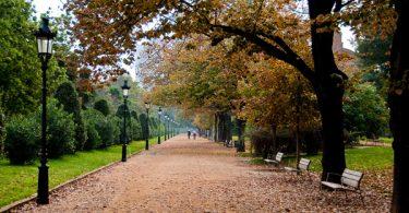 аллея в парке с деревьями