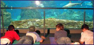 дети смотрят на аквариум