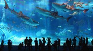 огромные акулы в аквариуме