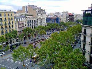 широкий бульвар с деревьями