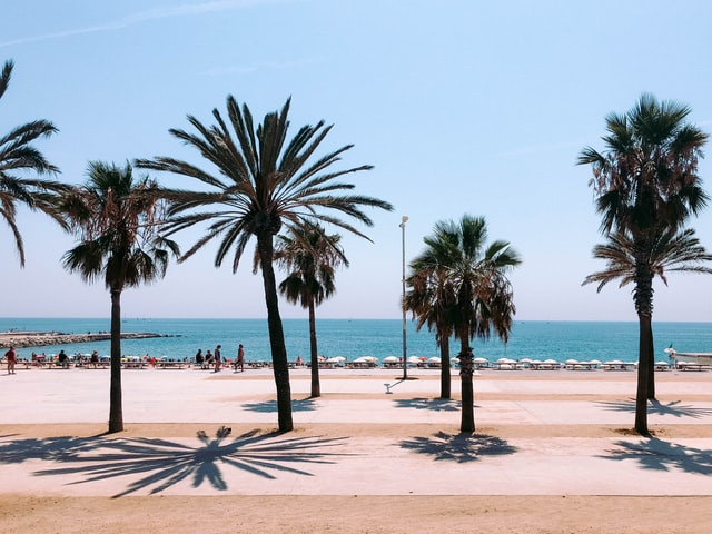 пальмы на дороге у моря