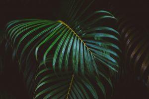 растения для солнечной террасы