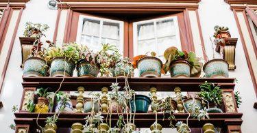 Лучшие растения для солнечной террасы