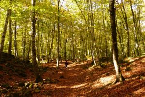 выехать на природу в Каталонии, агротуризм