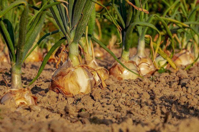 Садоводство в Барселоне