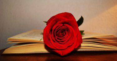 Праздник Сан Жорди, День влюбленных в Каталонии, Sant Jordi