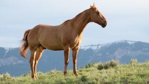 коричневый конь на склоне горы