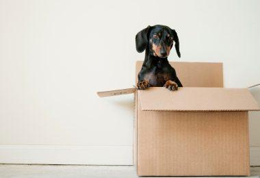 5 советов, как облегчить переезд