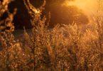 Растения, которые могут вызвать аллергию