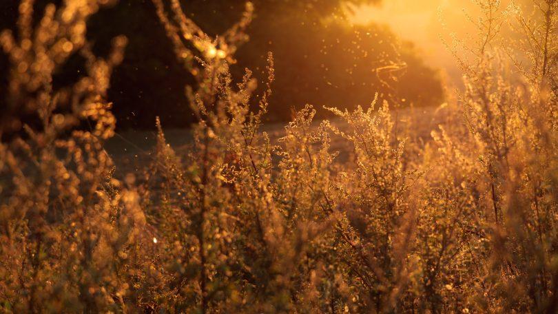 растения в поле в солнечном свете