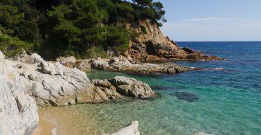 морское побережье с деревьями