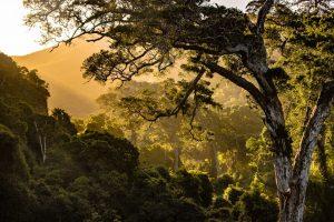 Всемирный день окружающей среды, экология, защиты окружающей среды
