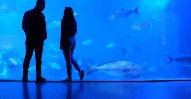 силуэты двух людей у аквариума