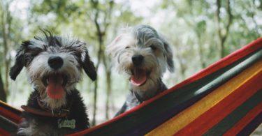 две собаки сидят в гамаке