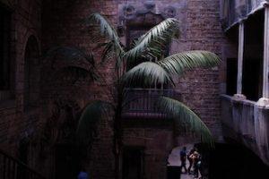 пальма во дворе в каменном здании