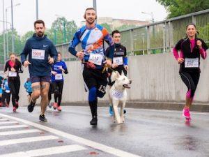 люди бегут марафон вместе с собакой